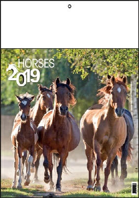 Calendrier 13 pages chevaux