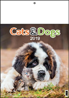 Calendrier 13 pages  CHIEN & CHATS